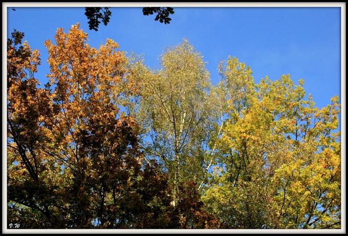 Feuillages d'automne