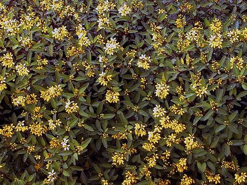 Belles fleurs et plantes