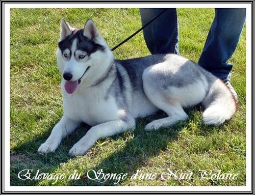 Exposition canine de Cahors (4 août 2013)