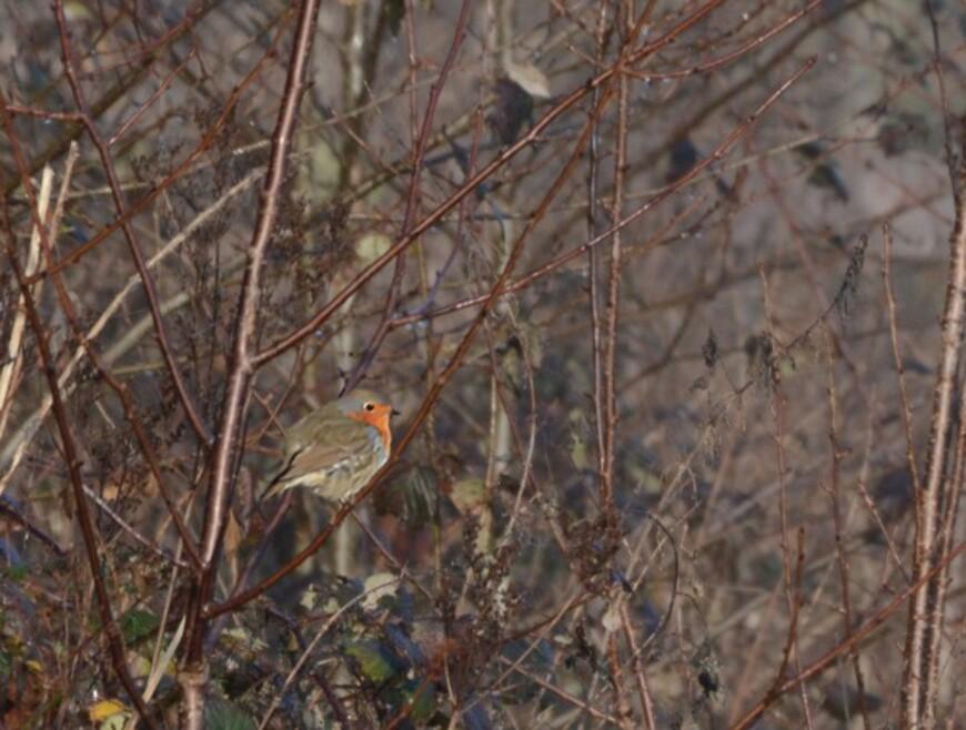 Oiseaux-2-6475.jpg