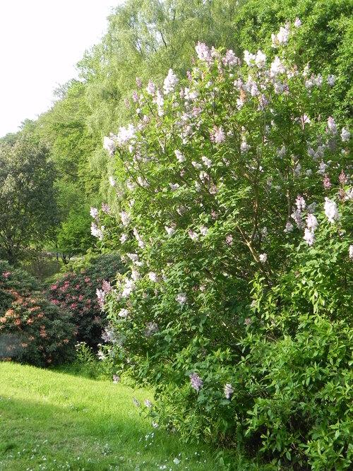 Visite du Parc au mois de Mai  2014