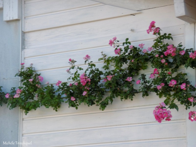 Une balade fleurie dans mon village... mais pas que... le 15 mai...
