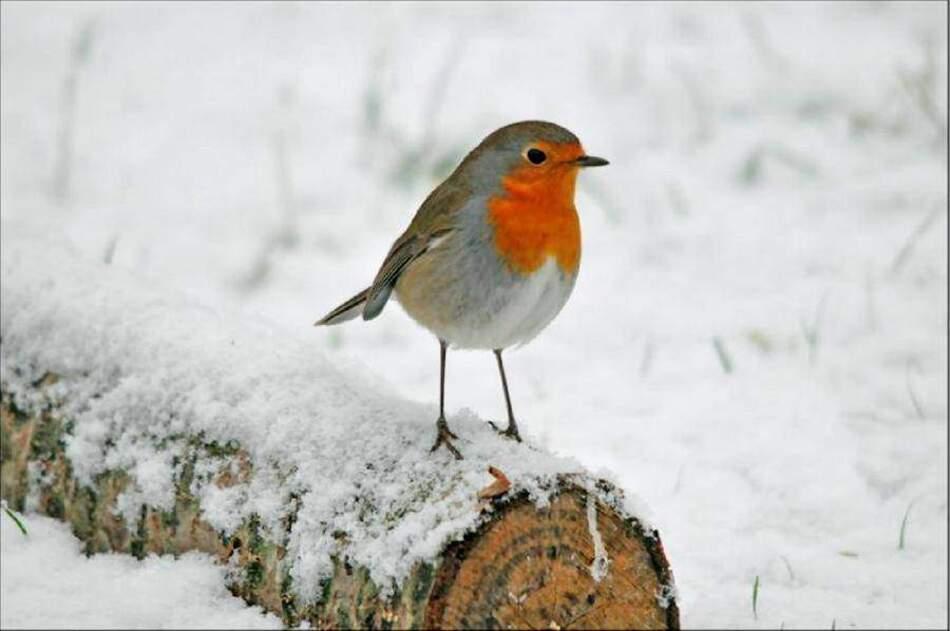 Faut-il Nourrir les Oiseaux ??