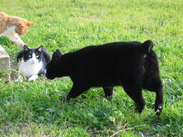 1-TIGROO-OSCAR-KIWI-JANVIER-2011---800x600-.jpg