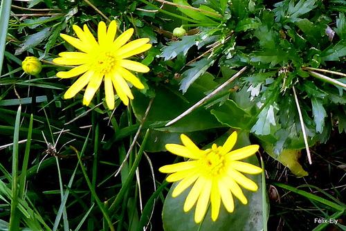 Jolies fleurs jaunes