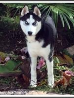 Maska (6,5 mois)