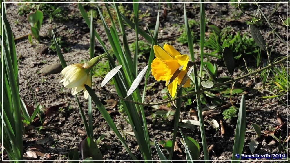 Les prémices du printemps - 1/4