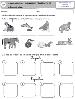 Les animaux : Evaluation