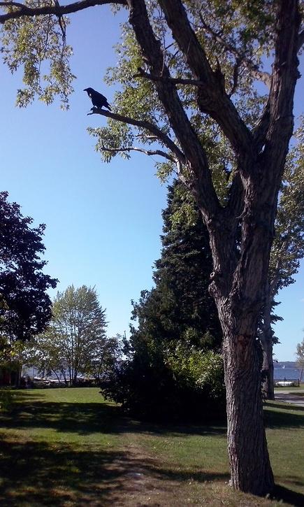 Autumn in Aylmer and Ottawa III