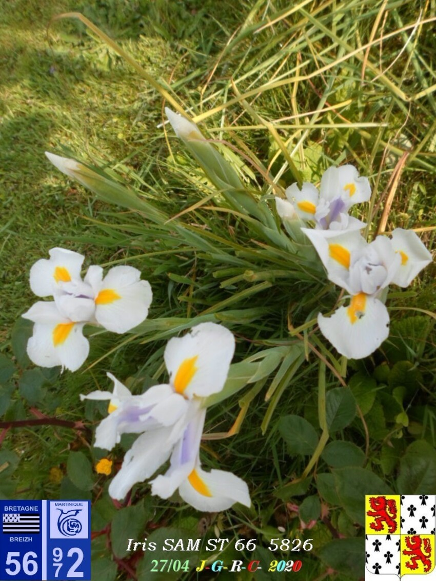 FLEURS  &  NATURE:   D   07/05/2020