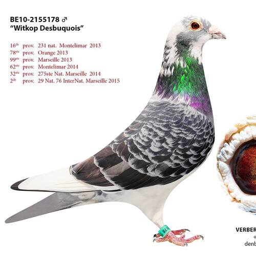 LOT N°27 : VERBERGT JAN DE HOMBEEK