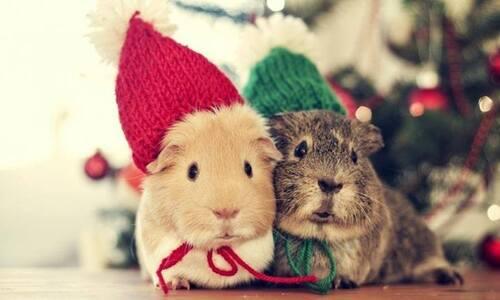Les bêtes mignonnes de Noël sont arrivées ! :)