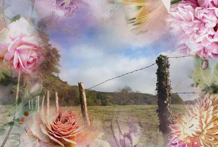 Belles Images de Philippe - Et si les arbres vous étaient contés