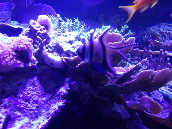 Aquarium d'Amnéville (4).