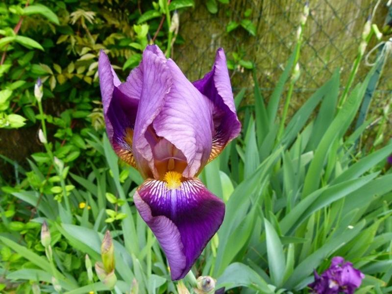 De la couleur au jardin