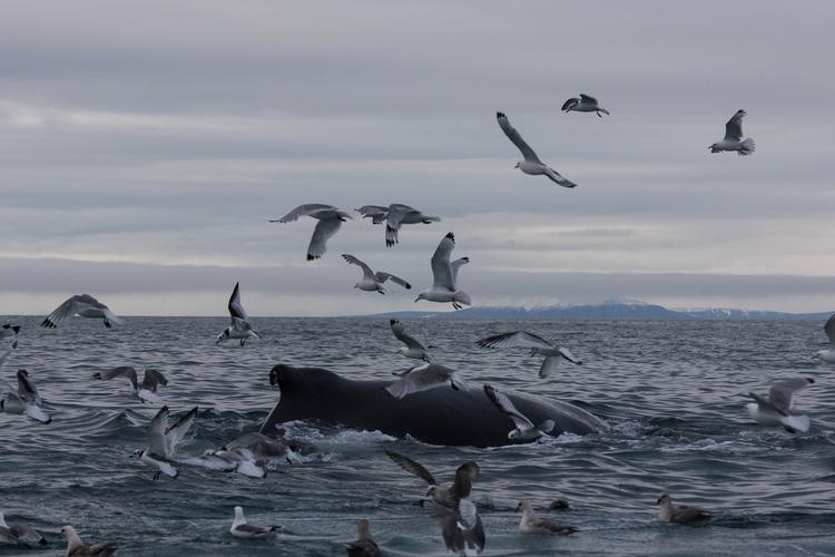 Finissons-en avec les baleines