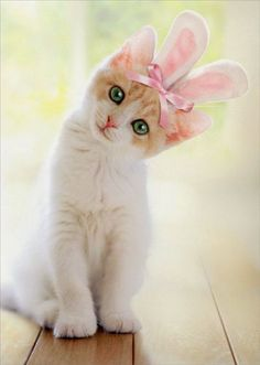 While you're enjoying your Easter feasting and fun, keep these safety tips in mind when it comes to your cat, and spread the word to help other families keep their cats safe, too.
