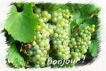 raisin_fruit_legume_divers_grappe_879317