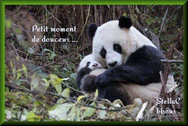 Maman Panda et son petit : image 2