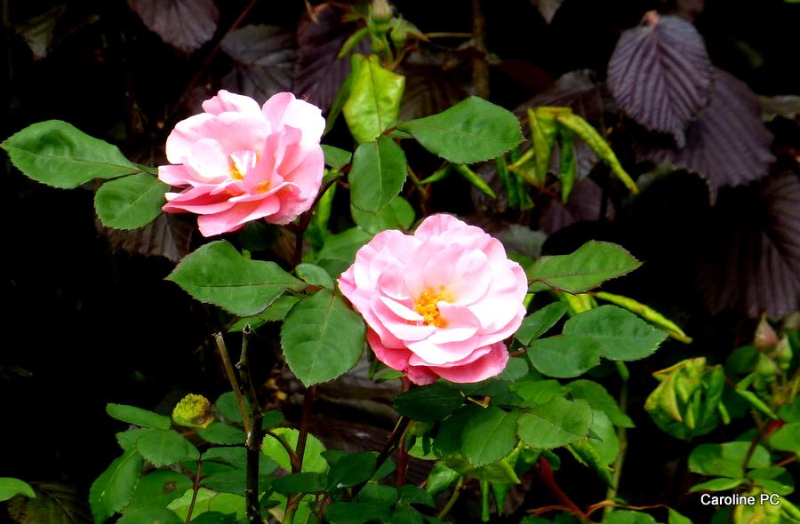 La Promenade fleurie se réveille