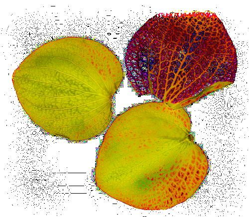tube pétales de fleurs