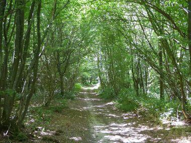 Le circuit de la forêt de l'Aigle