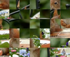 Jouer à Ecureuil souriant puzzle