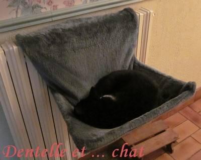 dentelle et chat