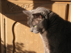 Mon chat :  Forest
