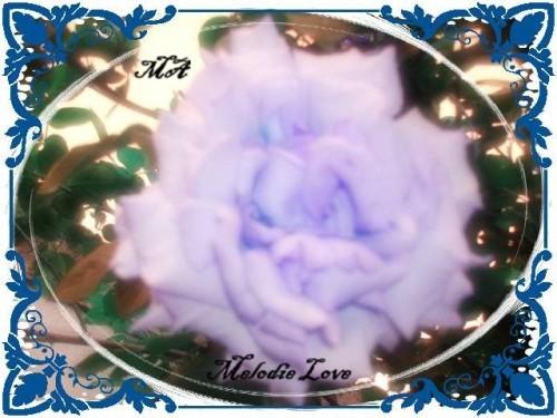 coeur-rose-bleu-MA.JPG