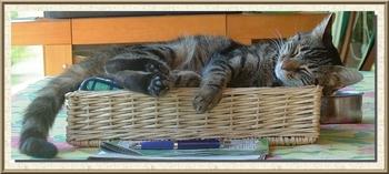 mimi sieste