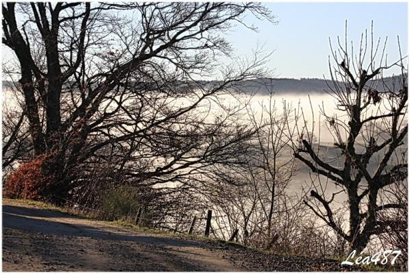 Ciel---temps-8240-arbres-brouillard.jpg