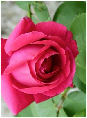Chédigny .. une suite fleurie et parfumée