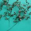 Roses 8.jpg