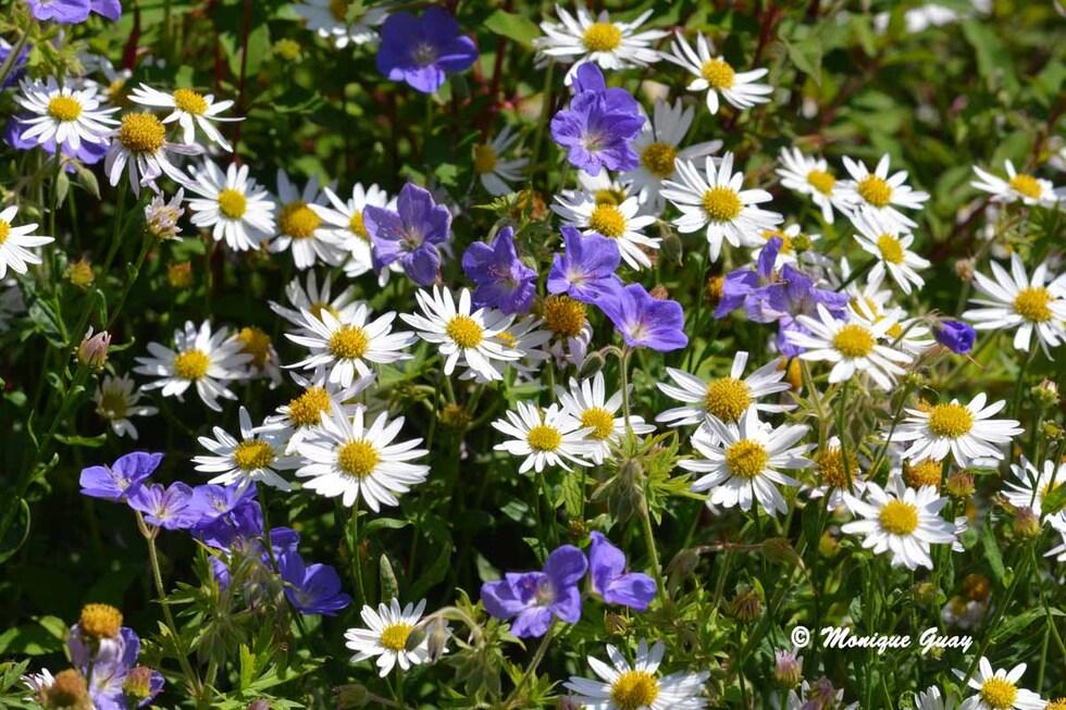 Méli-mélo fleuri