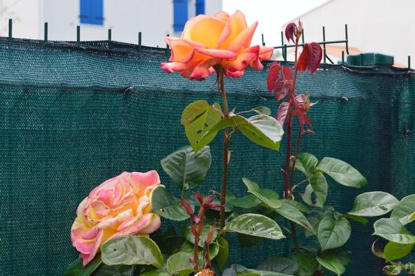 Mon jardin 10/05/2019