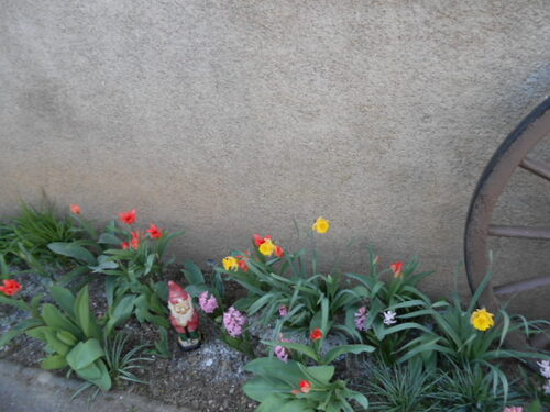 Un petit tour au jardin !