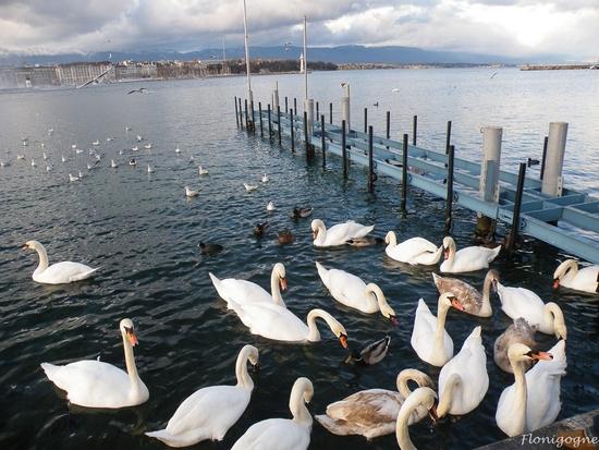 genève_oiseaux_décembre 2009 (40)