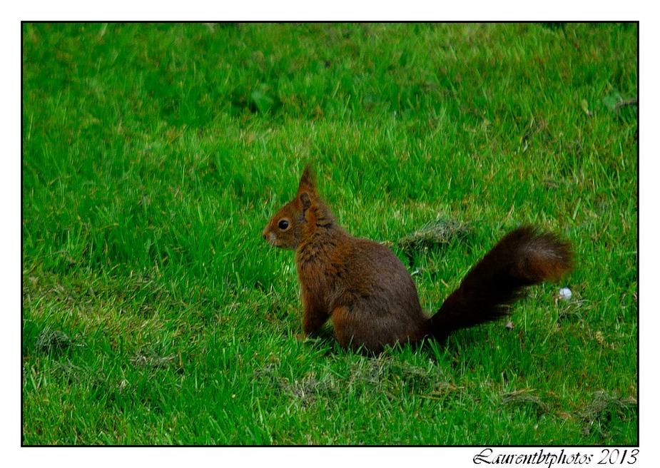 Quelques écureuils...