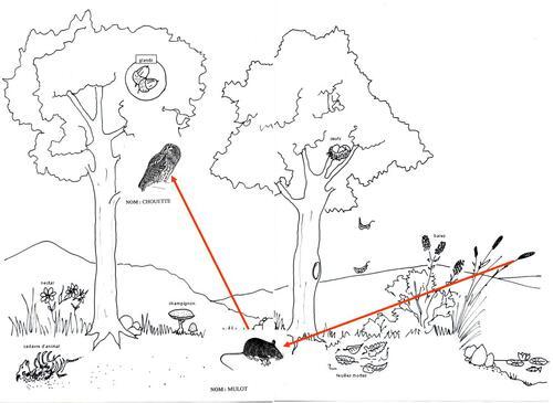 chaines et réseau alimentaires CE2