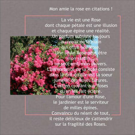 Rosier_pleureur