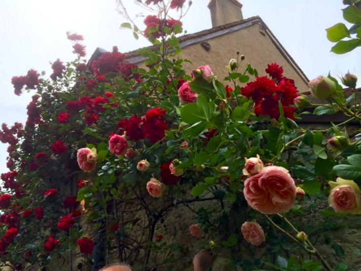 Les roses de Saadi
