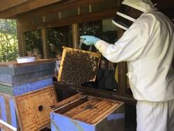 Visite du rucher didactique 4D
