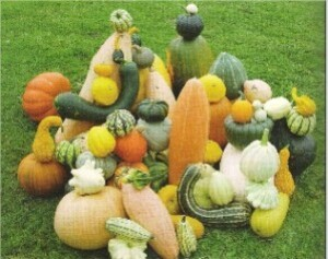 LLes courges