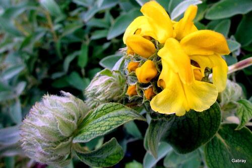 Fleurs de mon jardin en mai ...