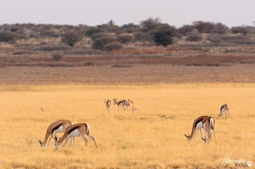 Mabuasehube, the Botswana side of the Kgalagadi Transfrontier NP
