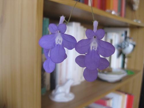 petites fleurs bleu-mauve