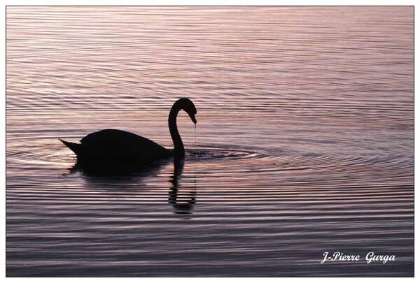 Personne ne se lasse des magnifiques photos de Jean-Pierre Gurga...