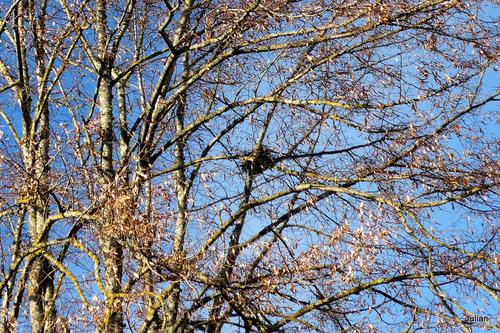 Le haut des arbres  (2)