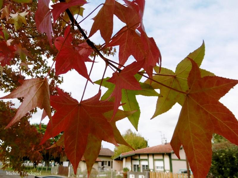 Des feuilles colorées et quelques fleurs de mon village le 7 octobre...